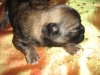 One weeks old pictures 5