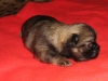 Achilleus is two weeks old 3
