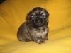 Three weeks old boy 1