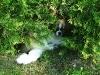 Under the bush