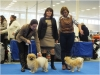 International Dog Show Nitra 2/2