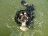 Úszás - nem az erősségem :)