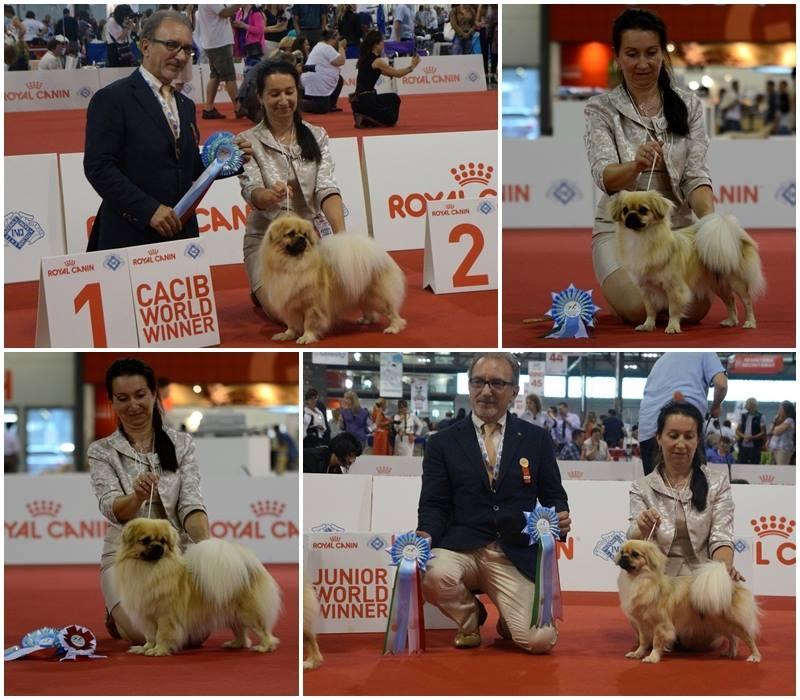 Milano World Dog Show 2015 WIN