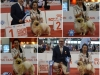 Milano World Dog Show 2015 WIN