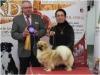 Tibet Dog Europe 2014 1/8