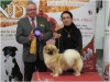 Tibet Dog Europe 2014 2/8
