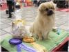 Tibet Dog Europe 2014 4/8