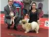 Tibet Dog Europe 2014 6/8