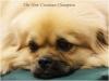 Tibet Dog Europe 2014 7/8